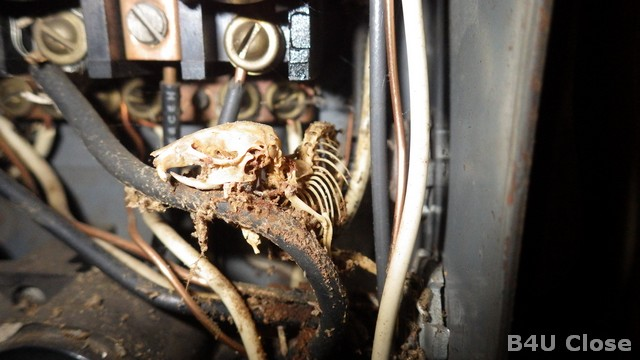 Mouse in Electrical Panel at Kentucky Home Inspection
